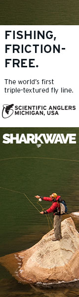 sharkwave