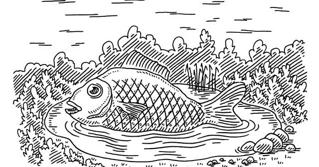 At survey best to be a big fish in a small pond or a for Be a big fish in a small pond