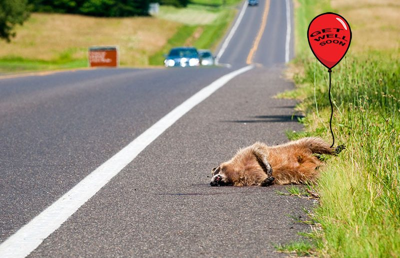 dead_coon