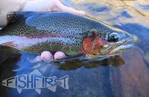 fishfirst